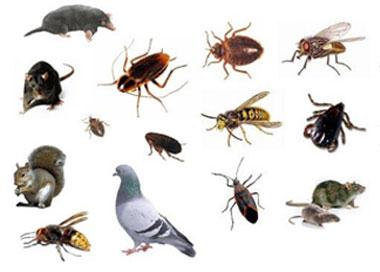 Pest Control In Kent